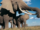 Elephants captured in 3D