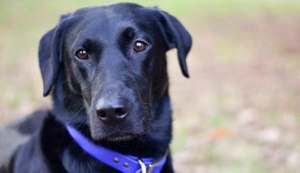 Discrete-Channel Surround Music: The Dog That Won
