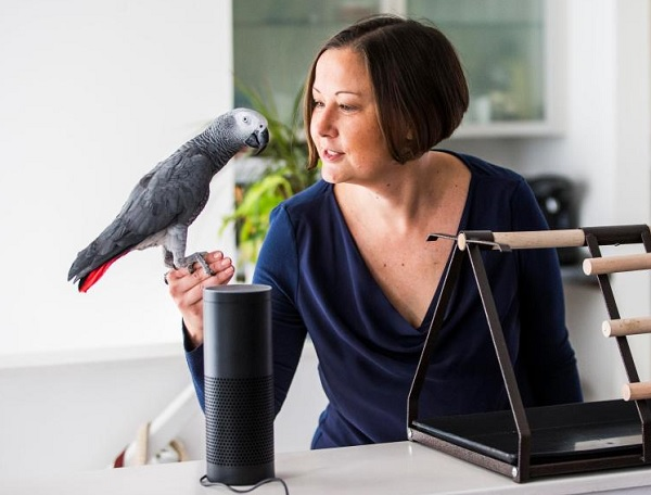 Alexa and the Bird Brain